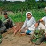 農業定例会議